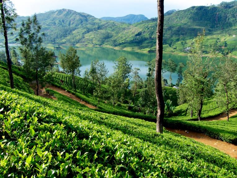 Ceylon Tea Plantations
